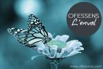 papillon prêt à s'envoler, envol du blog Ofessens