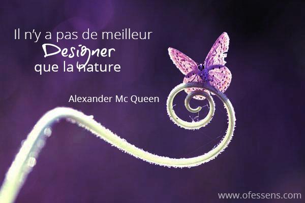 papillon nature best designer web design pour les nuls en technologie