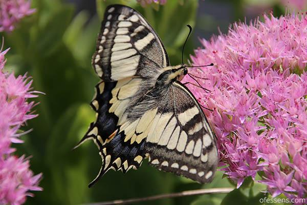 Méditation guidée par un papillon